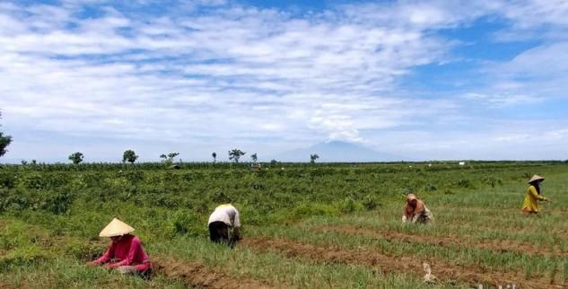 Pulau Jawa Dominasi Dalam Sektor Pertanian