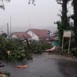 Puting Beliung Terjang Kota Bogor: Pohon Tumbang, 50 Rumah Rusak