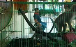 Sopir Lintas Provinsi Ditangkap Polisi Karena Jual Satwa Langka